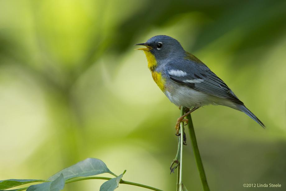 Generico cialis colombia